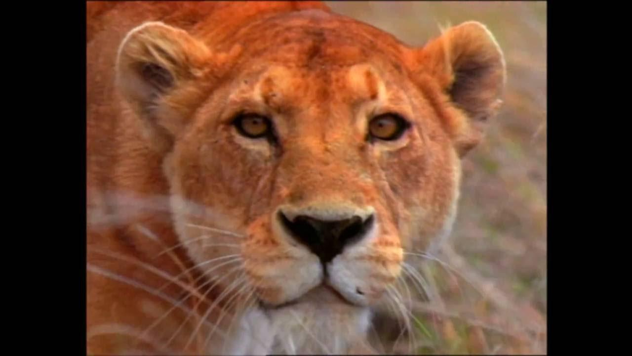 Baby Einstein Aventura Mundo Animal – Parte 3 🚀 - Videos ...