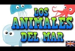 Animales del mar en inglés / Inglés para niñas y niños con Mr. Pea